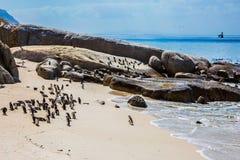 Flussstein-Pinguin-Kolonie Stockbild