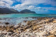 Flussstein-Pinguin-Kolonie im Nationalpark stockfotografie