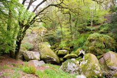 Flusssteine bei Huelgoat in Bretagne, Frankreich Stockfotografie