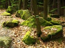 Flusssteine im Wald Lizenzfreies Stockfoto