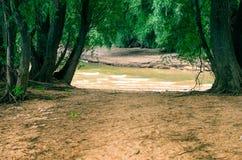 Flussstrang, -bäume und -sand Stockbilder