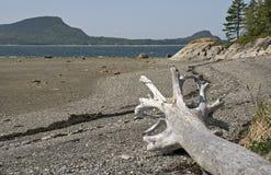 Flussufer Str.-Lawrence mit totem Baum Stockbilder