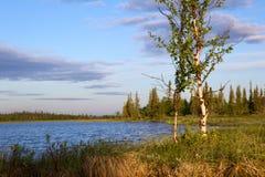 Flussufer und Birke Lizenzfreies Stockfoto