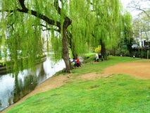 Flussufer von Fluss Wey bei Guildford Lizenzfreies Stockfoto