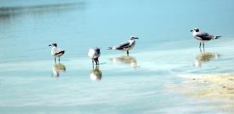 Flussuferläufer Lizenzfreie Stockfotos