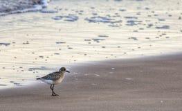 Flussuferläufervogel stockbilder