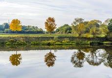 Flussuferszene mit Bäumen, die im Fluss Tauber reflektiert werden Lizenzfreie Stockfotografie