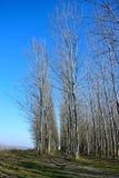 Flussuferwald Stockbild