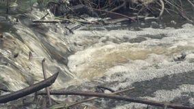 Flussverdammung von Zweigen stock video