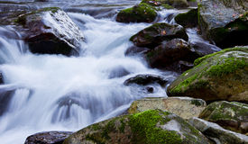 Flusswald Stockbild