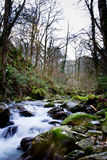 Flusswald Stockbilder