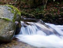 Flusswald Stockfoto