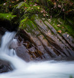 Flusswald Lizenzfreie Stockfotos