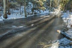 Flusswasser freezed zwischen den Bäumen Stockbild