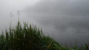 Flusswasserstrom des frühen Morgens in der nebelhaften Nebel- und Uferflora stock footage