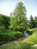 Flusswiese lizenzfreies stockfoto