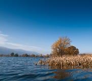 Flut. Überschwemmtes Maisfeld in Slowenien. Lizenzfreie Stockfotografie