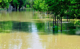 Flut auf dem Fluss Donau Stockfoto