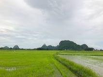Flut auf dem Reisgebiet und Berg bei Thailand Stockfotografie