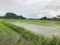 Flut auf dem Reisgebiet und Berg bei Thailand Stockfoto
