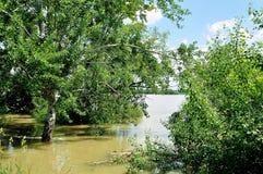 Flut in dem Fluss Donau Lizenzfreie Stockbilder
