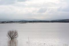 Flut - ein natürliches Phänomen Verschütteter See Stockbilder