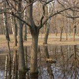 Flut im Park Stockbild