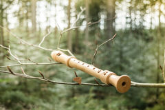 Flute on a branch. Flute on a tree branch in nature Stock Photo