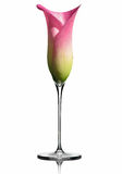 A flute of champagne / calla lily Stock Images