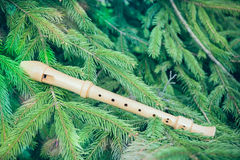 Flute on fir branches. In nature Royalty Free Stock Images