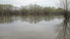 Flutflussfluß, verschüttete Bäume des Waldes nach großem Gewitter Naturunfälle, Katastrophe, Regensturm stock footage