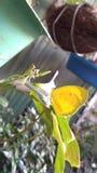 Flutterby royaltyfria foton