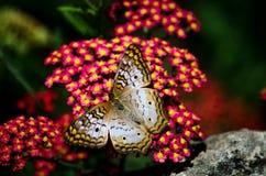 Flutterbys et fleurs Photos stock