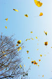 Fluttering leaves Stock Image