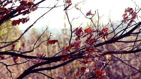 Fluttering Leaves on Tree Branches. Footage stock footage
