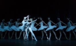Fluttua e sale il lago swan di alto-balletto immagine stock libera da diritti
