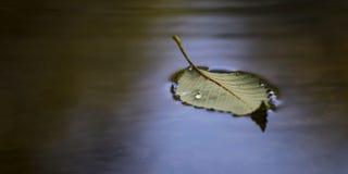Flutuação da folha Fotografia de Stock