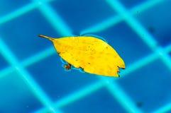 Flutuador amarelo da licença na água imagens de stock