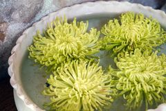 Flutuador da planta verde na decoração da bacia da água fotografia de stock royalty free
