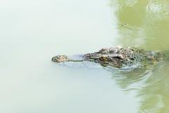Flutuador do crocodilo imagem de stock royalty free