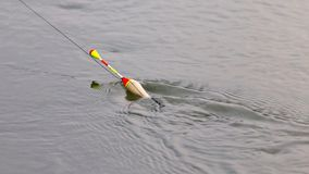 Flutuador para pescar na água fotos de stock royalty free