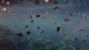 Flutuar coloriu peixes de mar tropicais em uma grande acumulação de bolhas do gás do oxigênio dissolvidas na água contra um coral filme