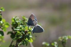 Fluturi Fotografia Stock