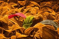 Fluweelwildernis Stock Fotografie