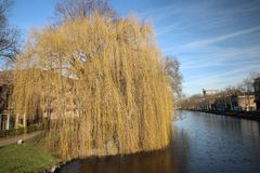 Fluwelensingel with the canal and a weeping willow without leaves in the winter in Gouda, the Netherlands. Fluwelensingel with the canal and a weeping willow stock photography