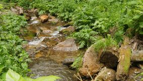 Fluxo abaixo da agua potável através das pedras na queda da água da floresta video estoque