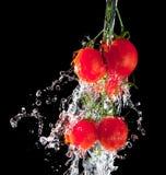 Fluxo da água do pourng no tomate imagem de stock