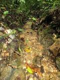 fluxo de Clear Springs em florestas tropicais imagem de stock