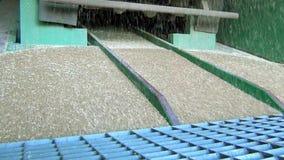 Fluxo de grãos que entram no bunker do elevador quando descarregam um caminhão para subsequente venda filme