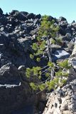 Fluxo do pinheiro & da obsidiana Foto de Stock Royalty Free